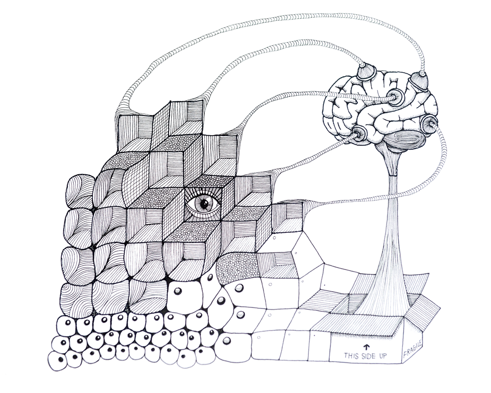 hersenen-pentekening2