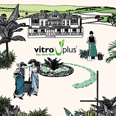Vitro Plus